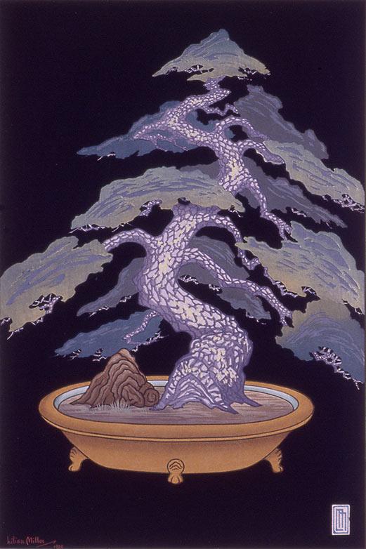 Dwarf Pine Tree