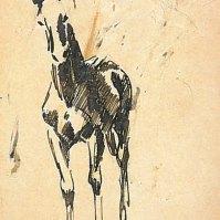 Fohlen, von vorn (Frontal view of a foal), 1910