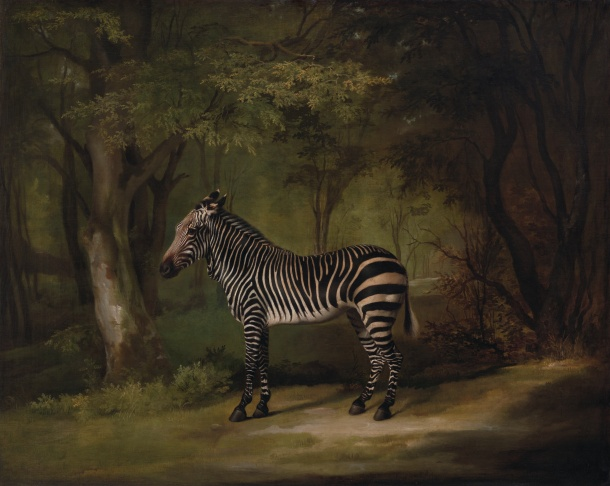 Zebra, Animal, Queen's Ass, Georgian England, Queen Charlotte, George Stubbs, Painting, Art, Yale Center for British Art, Paul Mellon Collection